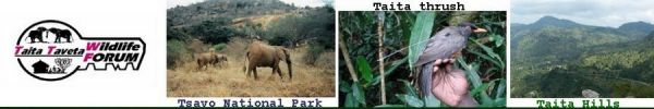 Taita Taveta Wildlife Forum-TTWF