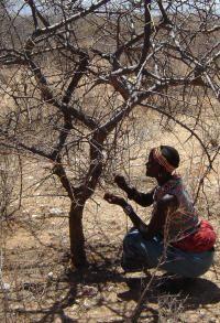 Arbor Oils of Africa